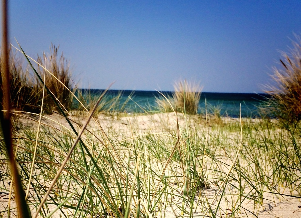 Strandhafer Kopie